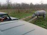 Rhino and jeeps