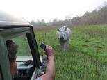 Rhino and jeeps2