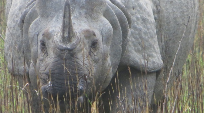 CLOSE ENCOUNTERS WITH RHINOS