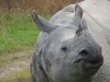 Rhino closeup2