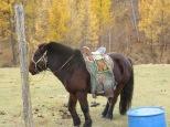 Nomad Horse