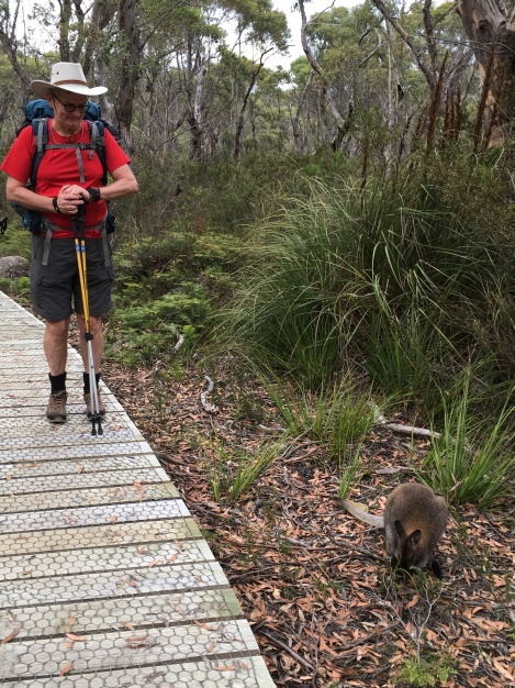 Ken with Wallaby