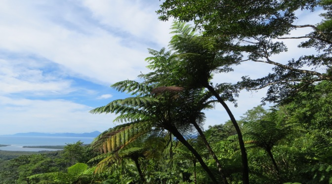 The Daintree rainforest – link to prehistory