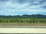 South of Daintree with sugar cane fields