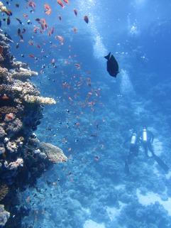 Reef, photo Pixabay.com