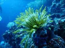 Reef plant, photo Tom Fisk
