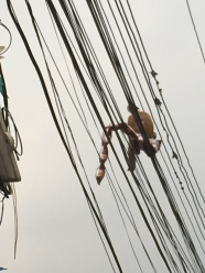 Running across the wires.