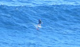 Hydrofoil surfing
