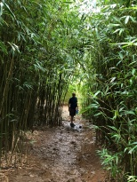Ken in bamboo forest
