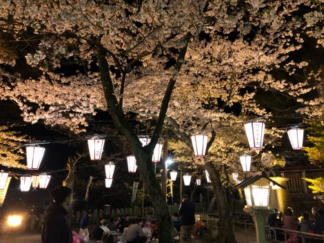 People celebrating Hanami, Tsuruga