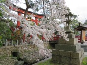 Kehi Jingu Shrine Tsuruga