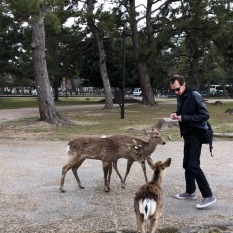 Max feeding the deer
