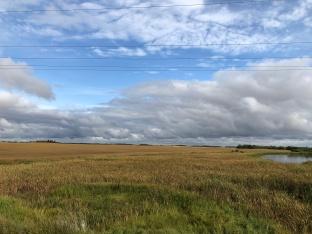 Barley field, MB, photo by Ken
