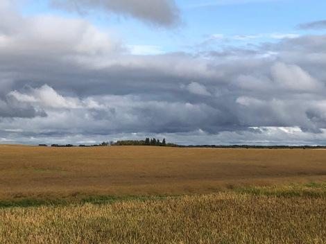Barley field MB, photo by Ken