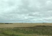 Wheat field SK, photo by Ken