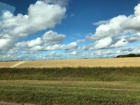 Wheat field, SK
